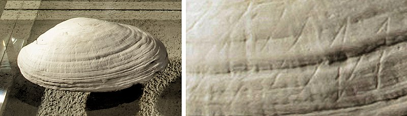 Modern Myths - Het DNA van fantastische verhalen - 800px-Homo_Erectus_shell_with_geometric_incisions_circa_500,000_BP,_Naturalis_Biodiversity_Center,_Netherlands_(with_detail)