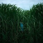 In The Tall Grass - het hoge gras