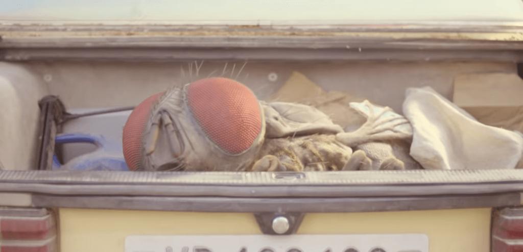 Grote vlieg in je kofferbak