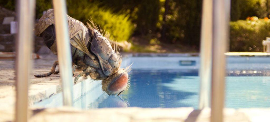 Grote vlieg in je zwembad